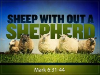 Sheep-without-a-Shepherd